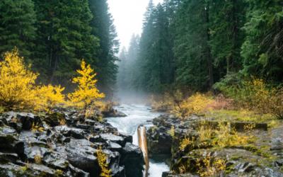 Fluir, flow…un estado energético.